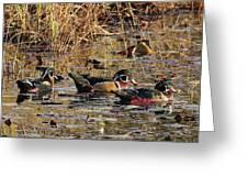 Wood Duck Trio Greeting Card