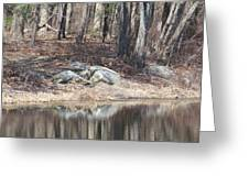 Wood Reflections Greeting Card