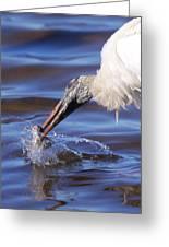 Wood Stork Fishing Greeting Card