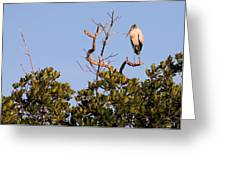 Wood Stork Out On A Limb Greeting Card