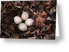 Woodcock Nest And Eggs Greeting Card