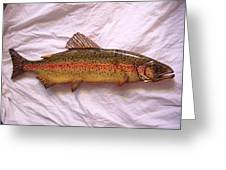 Wooden Rainbow Trout Number Nine Greeting Card