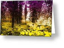 Woodland Color Greeting Card