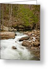 Woodland Creek Greeting Card