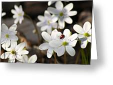 Woodland Flora And Friend Greeting Card