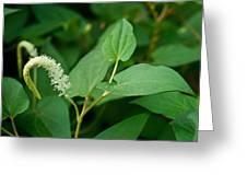 Woodland Flower 1 Greeting Card