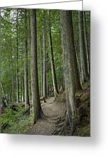 Woodland Forest Path Greeting Card