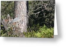 Woodland Great Blue Heron Greeting Card