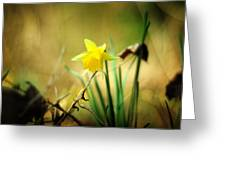 Woodland Narcissus Greeting Card