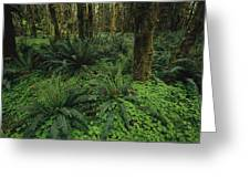 Woodland Rain Forest View With Mosses Greeting Card by Melissa Farlow