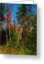 Woodland Ramble Greeting Card