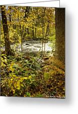 Woodland Scene Greeting Card