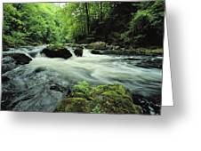 Woodland Stream And Rapids, Time Greeting Card