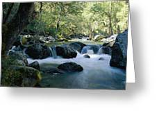 Woodland View Of A Small Creek Flowing Greeting Card