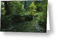 Woodland View With Stream Greeting Card
