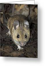 Woodmouse Greeting Card