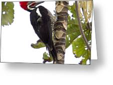 Woodpecker 1 Greeting Card