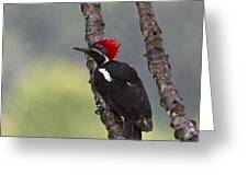 Woodpecker 4 Greeting Card