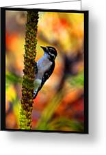 Woodpecker On Mullein Greeting Card