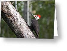 Woodpecker Sizes Me Up Greeting Card
