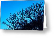 Woods And Sky Greeting Card