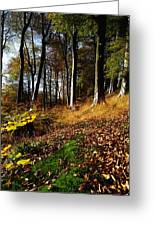 Woods During Autumn Greeting Card
