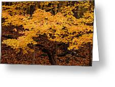 Woods Of Yellow Greeting Card