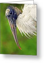 Woodstork Portrait Greeting Card