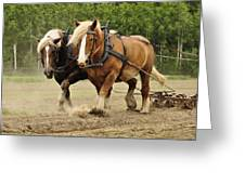 Working Horse Greeting Card by Conny Sjostrom