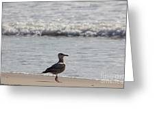 Wounded Seagull 3 Hurt Standing On One Leg Beach Photograph Art Seascape Bird Birds Beaches Sea Pics Greeting Card