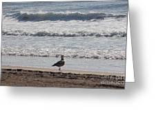 Wounded Seagull 4 Seagulls Birds Photos Beach Beaches Sea Ocean Oceanview Scenic Seaview Art Pics Greeting Card