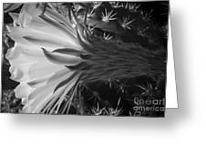 Woven Flower Bw Greeting Card