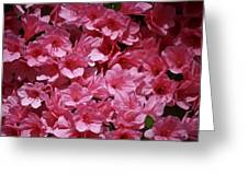Wow Factor Greeting Card