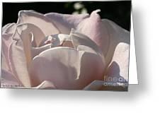 Wwii Memorial Rose Greeting Card