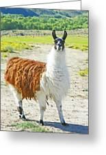Wyoming Llama - El Tuffo Greeting Card