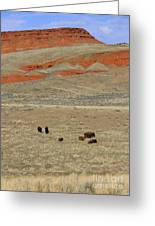 Wyoming Red Cliffs And Buffalo Greeting Card