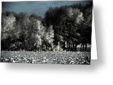 Wyoming Snowstorm October 2011 Greeting Card