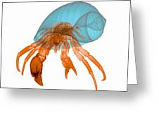 X-ray Of Hermit Crab Greeting Card
