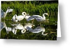 Y-m-c-a Swans Greeting Card