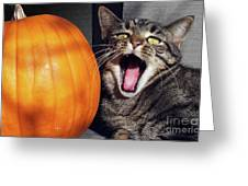 Yawning Vineyard Cat Greeting Card