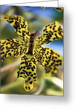 Yellow And Black Spotted Orchid Greeting Card