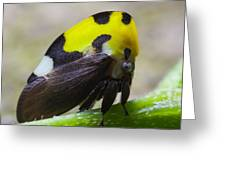 Yellow And Black Treehopper Greeting Card
