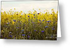 Yellow And Blue Wildflowers Greeting Card by Kim Fearheiley