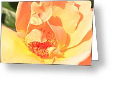 Yellow And Peach Rose Greeting Card