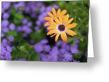 Yellow And Purple Greeting Card