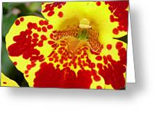 Yellow And Red Bright Flower Greeting Card