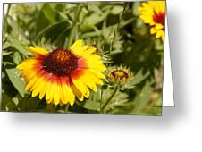 Yellow And Red In The Sunshine Greeting Card