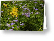 Yellow And Violet Flowers Greeting Card