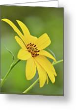 Yellow Artichoke Greeting Card