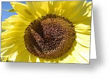 Yellow Autumn Sunflower Greeting Card